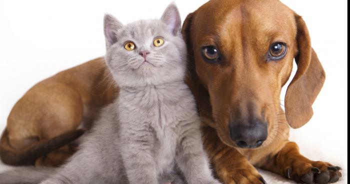 Stérilisation des chats et chiens obligatoire dès 2017
