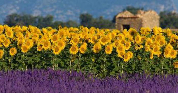 Marseille : Des touristes portent plainte contre les cigales pour nuisance