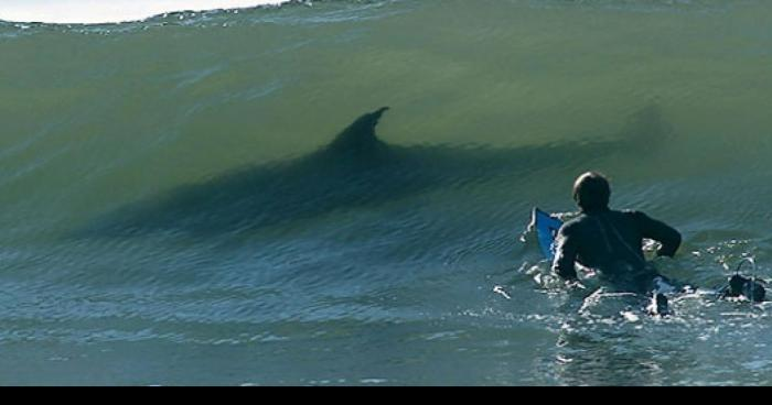 Surfeur requin biarritz