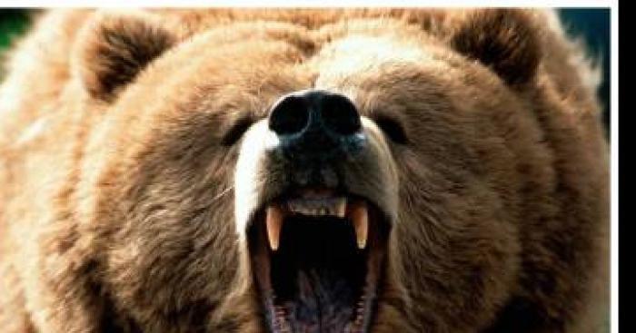 PONS (17 ) : Une famille Pontoise attaqués par des ours lors d'une randonnée dans les Pyrénnés