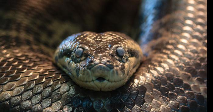 Qui veux des reptiles gratos ;) 800c21b340aa87173db1dc2fe552c367