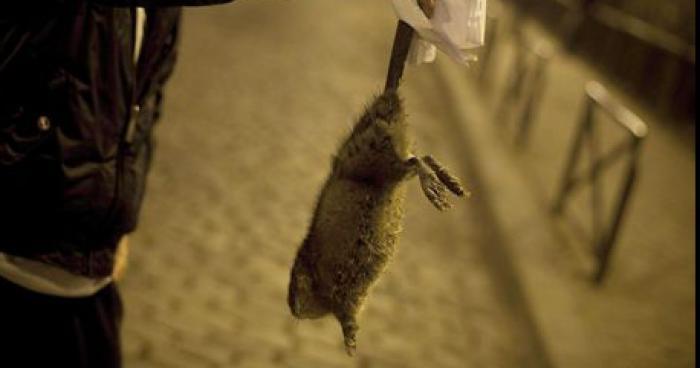 Attaque de rats dans le métro parisien: 2 morts